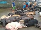 Órgãos defendem parceria para evitar transporte e venda de carne irregular