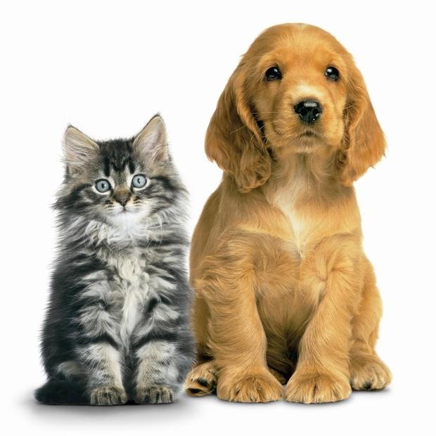 Cães e gatos podem conviver no mesmo domícilio (Foto: Shutterstock)