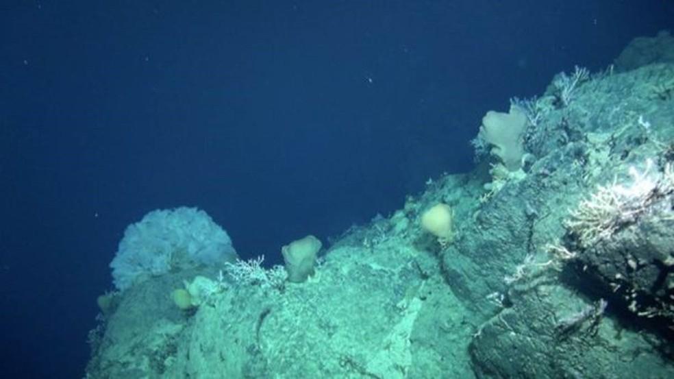 A descoberta do Mont Tropic levanta o debate sobre vantagens e riscos da mineração no fundo do mar  (Foto: NOC)