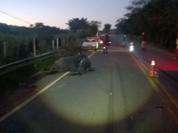 Búfalo morre após ser atropelado por caminhão na MG-167, entre Varginha e Três Pontas (Foto: Corpo de Bombeiros)