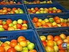 Preço do tomate dispara por baixa produtividade das lavouras em SP
