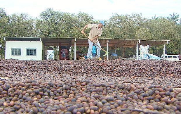 'Barcaça Seca Café' agradou produtores do grão em Ouro Preto do Oeste (Foto: Bom Dia Amazônia)
