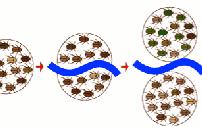 Entenda como ocorrem variações entre espécies (USP)