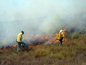 Fogo destrói cerca de 1.500 hectares na região da Serra da Canastra em MG (Foto: Instituto Chico Mendes)