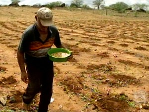 Agricultores da Afrânio aproveitam a chuva para plantar (Foto: Reprodução/ TV Grande Rio)