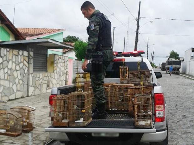 Aves foram apreendidas em dois bairros de João Pessoa  (Foto: Arquivo Pessoal/Coronel Paulo Sérgio)