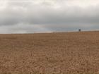 Chuva prejudica produção de trigo, e indústria analisa qualidade do grão