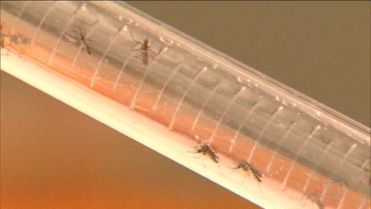 Teste único do Bio-Manguinhos identifica zika, dengue e chikungunya