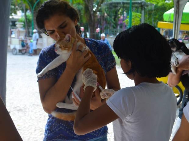 Cães e gatos que vivem nos bairros da Marambaia, Curió e Mangueirão, em Belém, poderão ser imunizados contra a raiva neste sábado (12). (Foto: Tássia Barros/Comus)