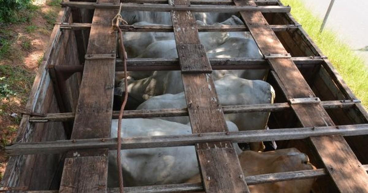 Animal morre por desidratação em caminhão abandonado com 20 ... - Globo.com