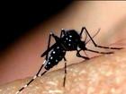 Especialistas derrubam alguns mitos no combate ao mosquito da dengue