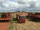 Colheita do milho em Goiás começa com boa produção e bom preço