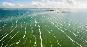 Os corais dos Jardins do Rei (na costa norte) são uma atração para os mergulhadores que visitam Cuba (Foto: Divulgação/Marius Jovaiša)
