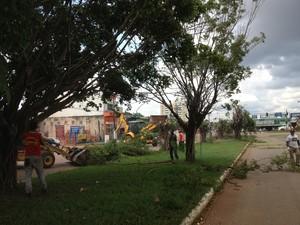 Ficus foram plantados de forma errada, segundo a Secretaria Municipal de Meio Ambiente (Foto: Marcos Paulo)