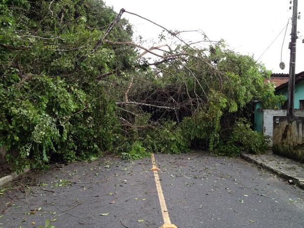 Árvore interrompeu trânsito da via por quase 4 horas (Foto: Walter Paparazzo/G1)