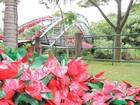 Decoração natalina ecológica é inaugurada em Guararema, SP