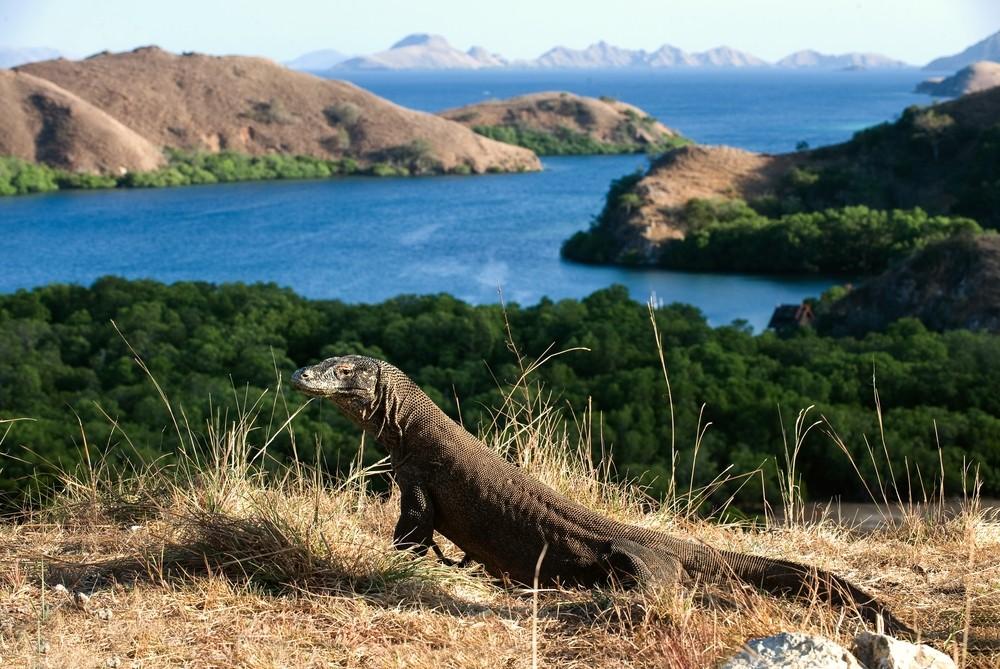 Drago de Komodo na Ilha Rinca, Indonsia (Foto: Sergey Uryadnikov / Shutterstock)