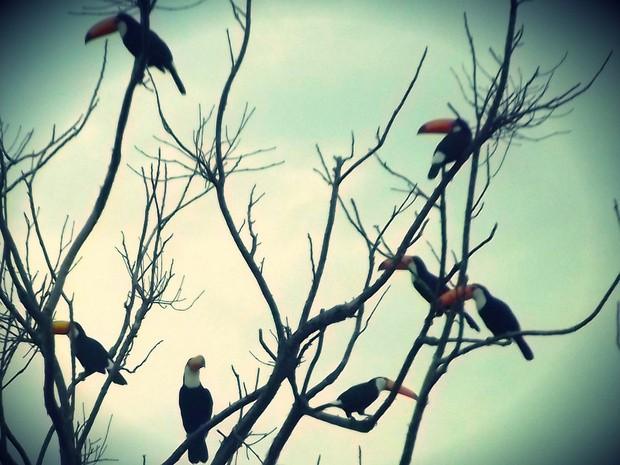 Estudante flagrou aves em área rural de Elias Fausto (Foto: Fernanda Zanetti/G1)