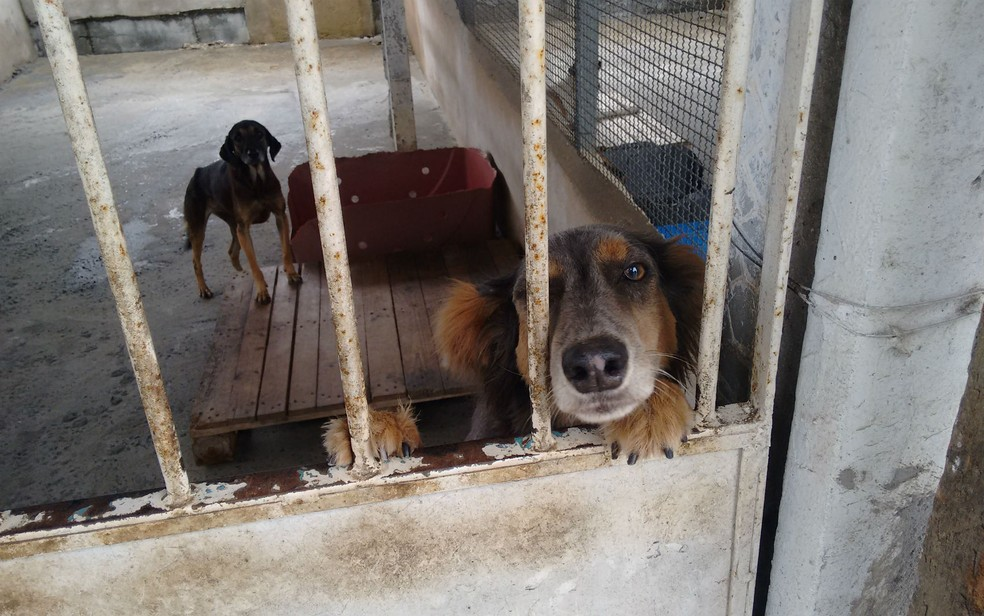 Cães no canil do abrigo São Francisco de Assis, em Salvador (Foto: Maiana Belo/G1 BA)