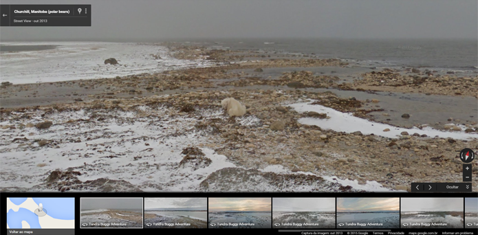 Registros realizados em Churchill, Manitoba, no norte do Canadá, mostram ursos sobrevivendo em lugares em que o gelo começa a desaparecer (Foto: Reprodução/Filipe Garrett)