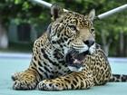 MPF-AM firma acordo com Exército sobre exposição de animais silvestres