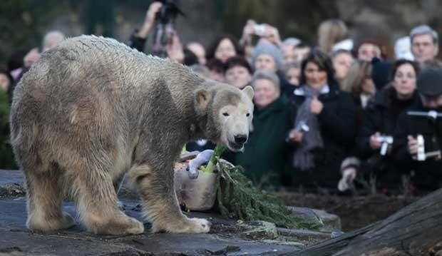 Knut come seu 'bolo de aniversário' em 2009 (Foto: Reuters)