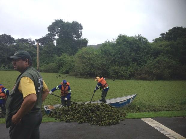 Plantas mudaram o cenário do lago no  Parque Barigui, em Curitiba  (Foto: Dulcineia Novaes / RPC )