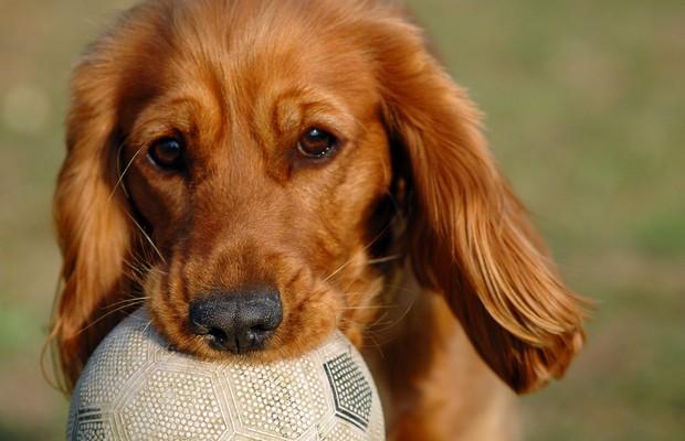 Cachorro com bola (Foto: SXC.HU)