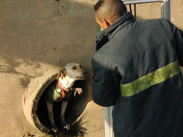 Cachorro foi resgatado por bombeiros após ficar preso em rede de esgoto.  (Foto: Marcus Vinicius Morbin/VC no G1)