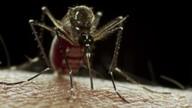 Cientistas discutem os efeitos do vírus da zika no corpo de adultos a longo prazo