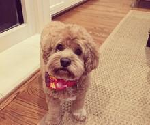 Tate - o cachorro de Paloma (Foto: Reprodução/Instagram)