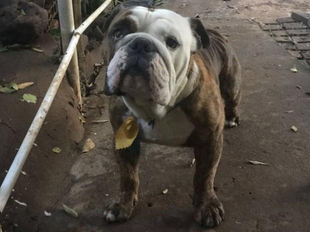Átila tinha 5 anos e morreu durante um banho em um pet shop (Foto: Divulgação)