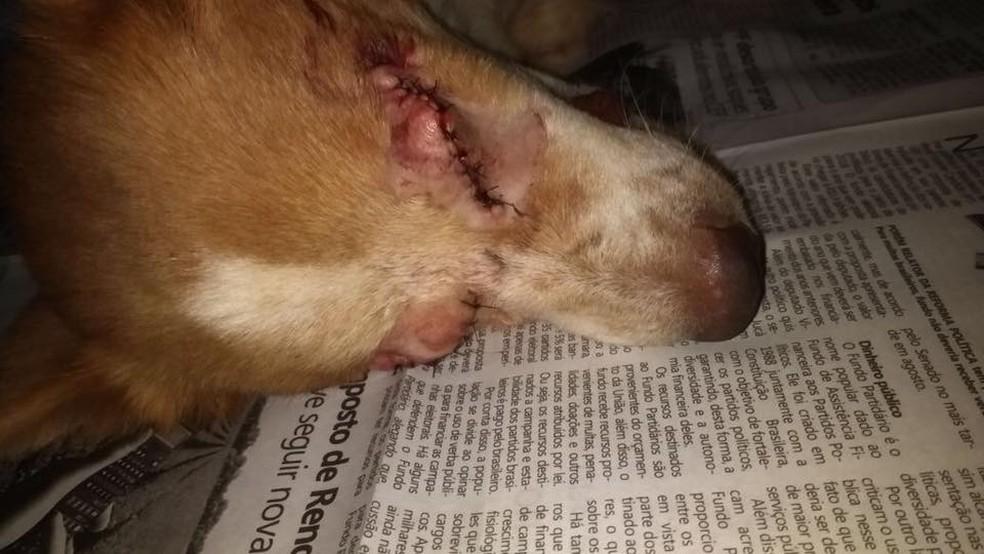 Cirurgia retirou os dois olhos do cão que foi resgatado (Foto: Victor Hugo Fernandes/Arquivo Pessoal)
