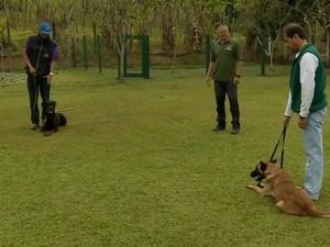 Especialista aconselha que cães considerados violentos sejam adestrados (Foto: Reprodução/TV Vanguarda/Arquivo)
