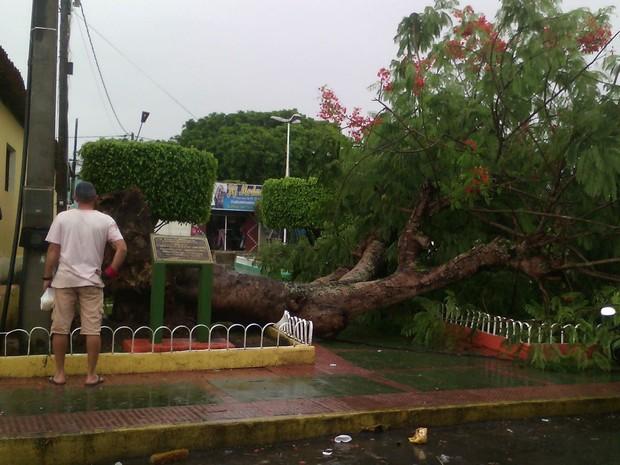Árvore caiu próximo da Igreja Matriz de São Benedito do Sul, na Mata Sul de Pernambuco (Foto: Reprodução / WhatsApp)