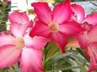 'Feira Flor Férias' tem exposição e venda de mais de 100 espécies