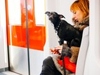 Madri aprova medida que permite acesso de cães a metrô