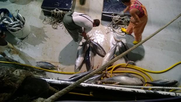 Além da embarcação, fiscais apreenderam 66 toneladas de atum pescados de forma irregular, segundo o Ibama  (Foto: Divulgação/Ibama-RN)