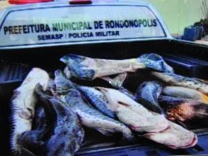 Homem é preso com 150 kg de pescado em MT (Foto: Reprodução TVCA)