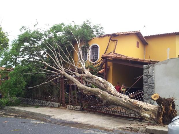 Pau-ferro cai e atinge parte de casa na Região de Venda Nova, em Belo Horizonte (Foto: Rouand Neves/Arquivo Pessoal)