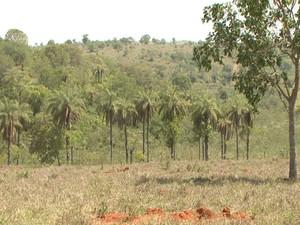 Macaúba Dores do Indaiá Minas Gerais (Foto: TV Integração/Reprodução)