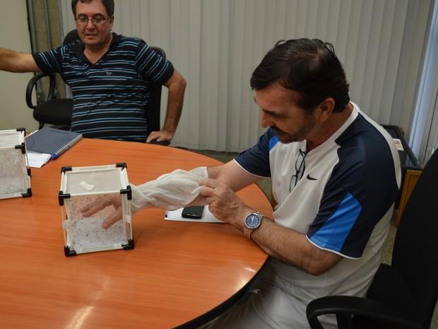 Secretário de Saúde de Piracicaba coloca a mão em mosquiteiro com 'Aedes do Bem' (Foto: Marcello Carvalho/G1)