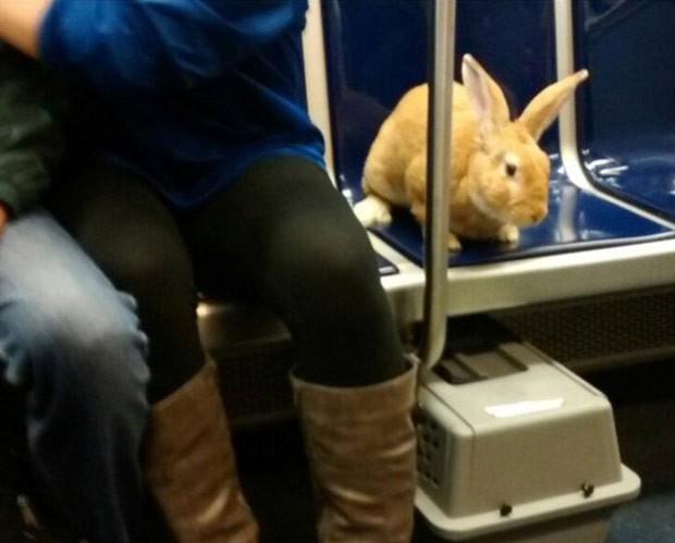 Coelho foi visto viajando em banco de trem da linha azul de Boston (Foto: Reprodução/Twitter/ MBTA Transit Police)
