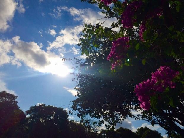 Semana deve começar com sol e depois chuva em grande parte de Mato Grosso do Sul, conforme o Inmet (Foto: Isabela Cavalcante/G1 MS)