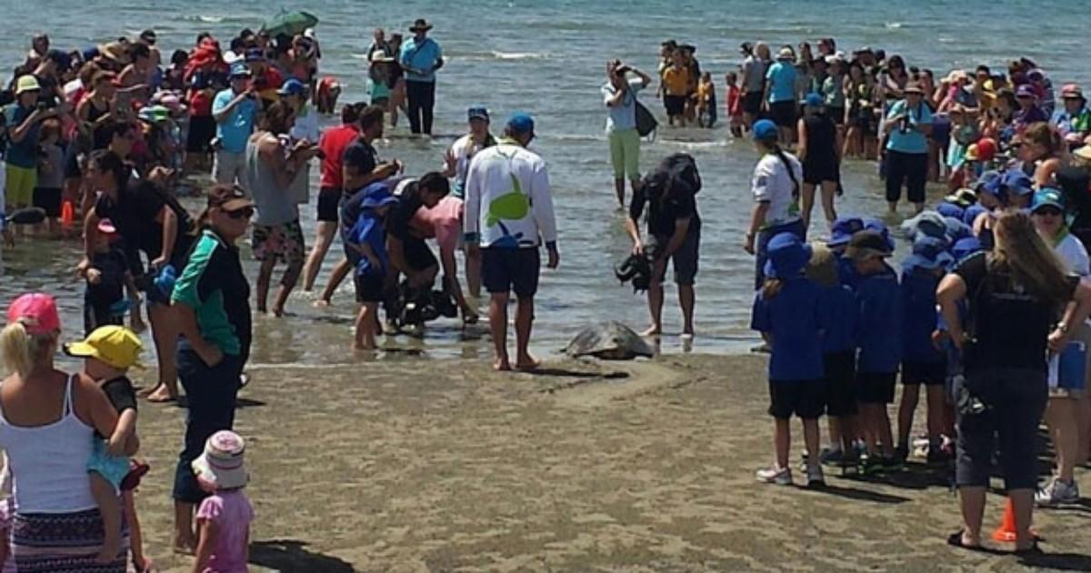 'Tartaruga durona' sobrevive a colisão com barco e ataque de ... - Globo.com