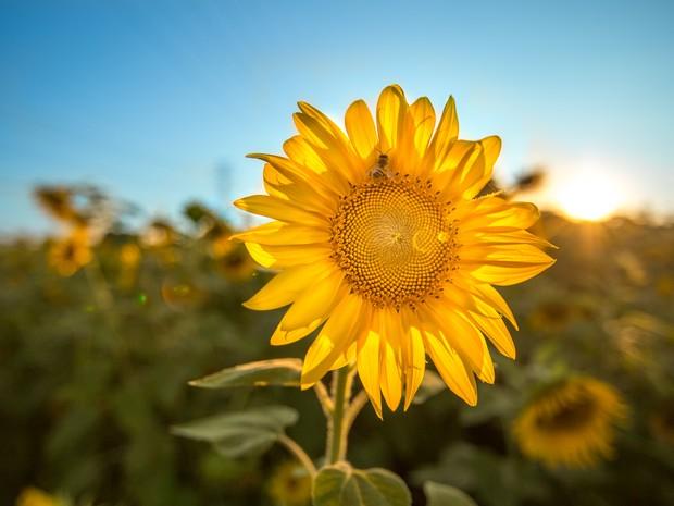 Flores têm despertado a atenção de moradores e turistas em Pinda (Foto: Arquivo Pessoal/ Diego Migotto)