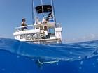 Brasileiro mergulha no Havaí com tubarões ameaçados de extinção