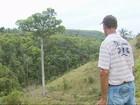 Pesquisa clona jequitibás para preservar espécie no Sul de Minas