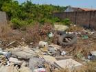 Em Santarém, 3 mil terrenos baldios facilitam criação do Aedes aegypti