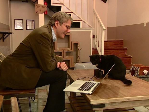Violoncelista David Teie fez composições especialmente para gatos (Foto: BBC)